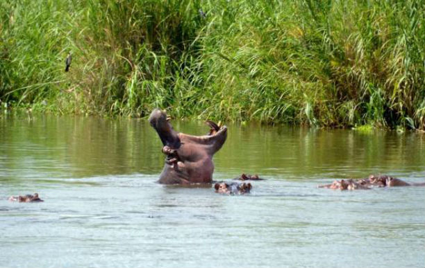 Parque liwonde Malawi