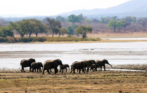 Parque liwonde malawi2jpg