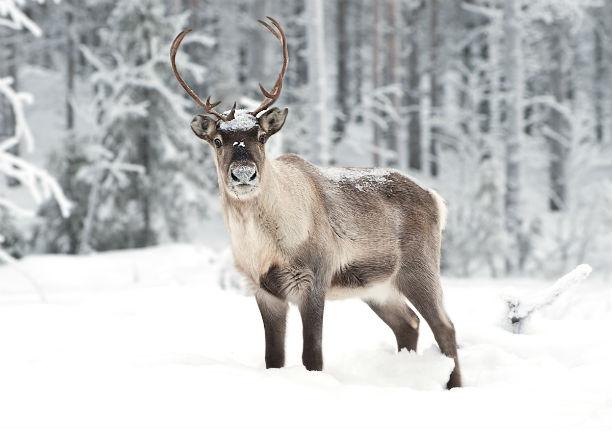 el norte de suecia